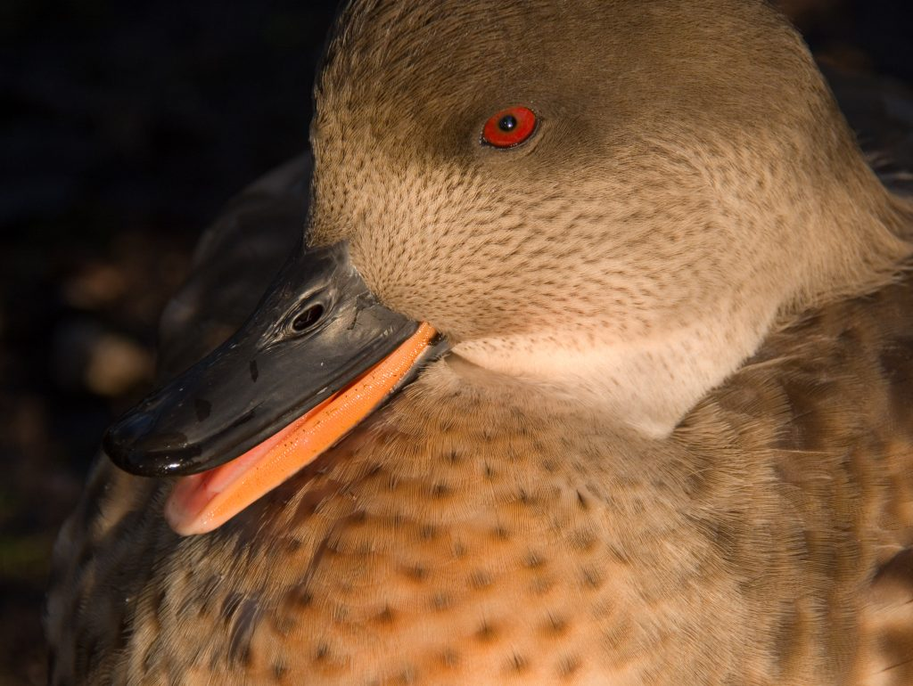 bird photography, Lancashire