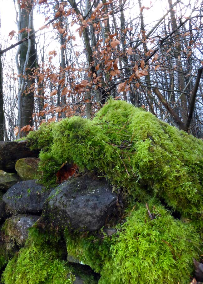 Moss-covered wall.