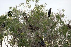 Nesting in the park.