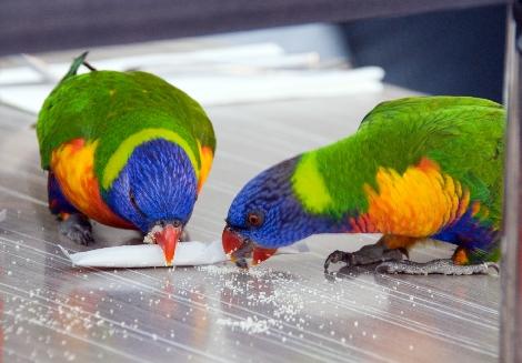 Getting their sugar rush!