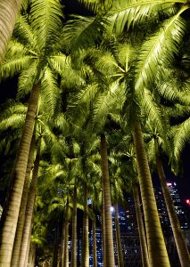 Floodlit palms