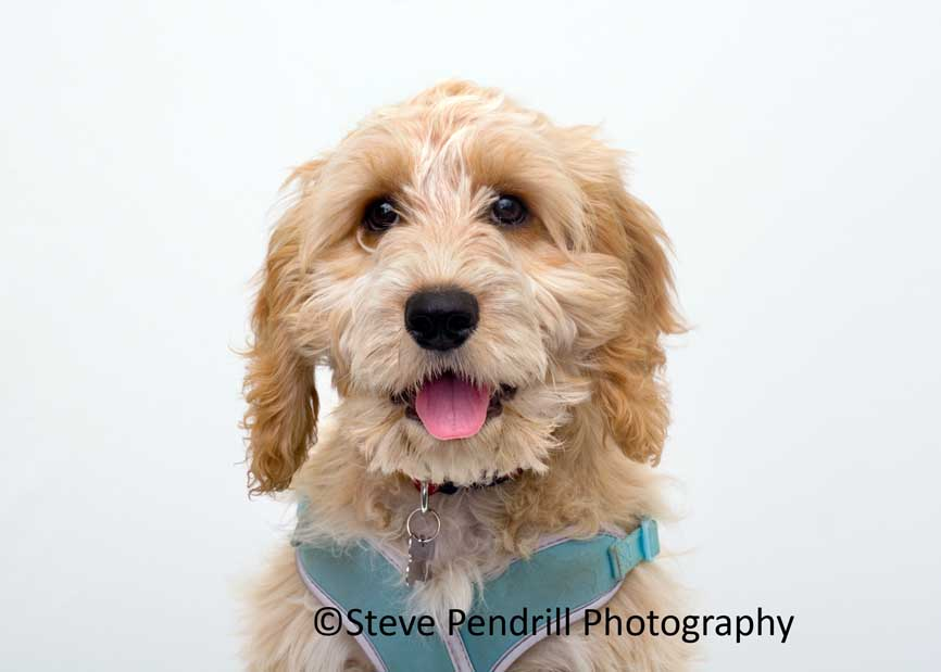 Animal Care Pet Portraits 2019